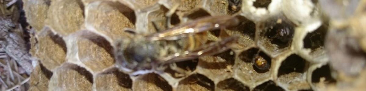 Permalien vers:Événements climatiques et nids de nuisibles
