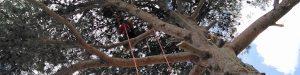 Élagage et entretien des arbres région Occitanie
